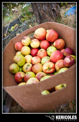 Apple pressing by Keri Coles